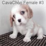 CavCF3- 7