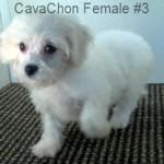 CavChnF3- 1