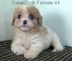 CavChnF4- 3