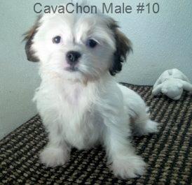 CavChnM10- 4