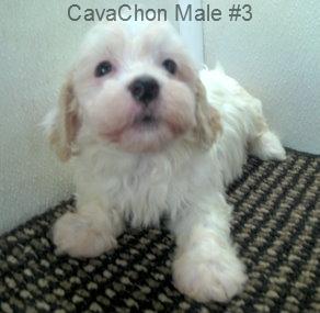 CavChnM3- 6