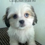 CavChnM9- 3