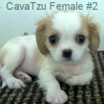CavTzuF2- 10