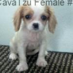 CavTzuF3- 12