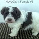 HChonF3- 2