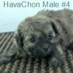 HChonM4- 2