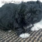 HavChonF2- 9