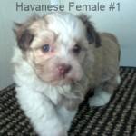 HavF1- 9
