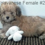 HavF2- 4