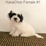 HavaChonF1- 7