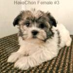 HavaChonF3- 11