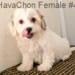 HavaChonF4- 10