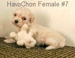 Hchonf7- 8