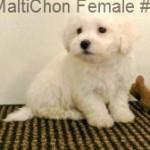 MalatiChonF1- 12