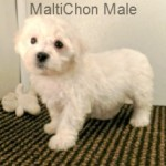MaltiChonM- 4