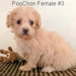 PooChonF3- 8