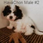 hchonm2- 1